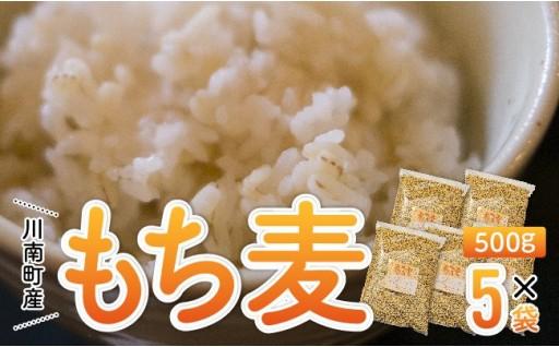 【令和元年産】川南町産もち麦!白米と一緒に炊くだけ!