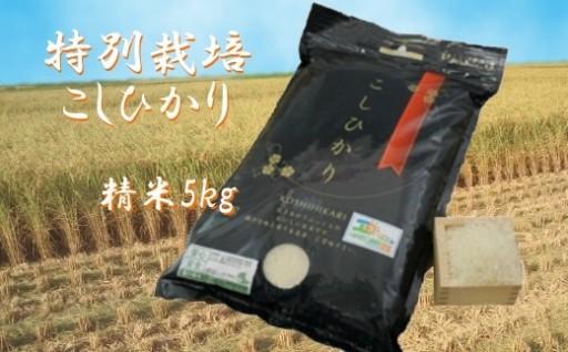 お米農家のキムラさんの、特別栽培米こしひかり5kg