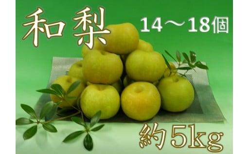 庄内の秋の味覚!和梨約5kg