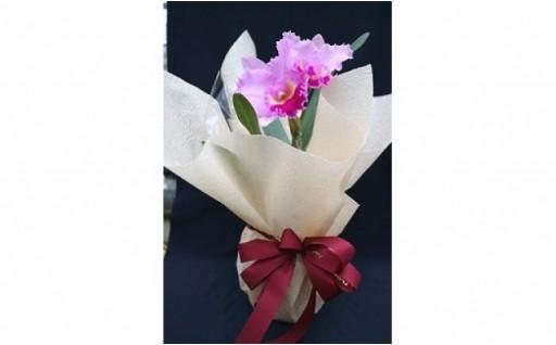 敬老の日に、カトレアの花を贈りませんか?