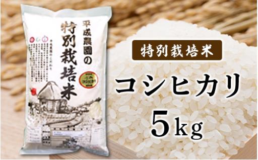 【お米がおいしい季節が近づいてきました】 コシヒカリ 5kg