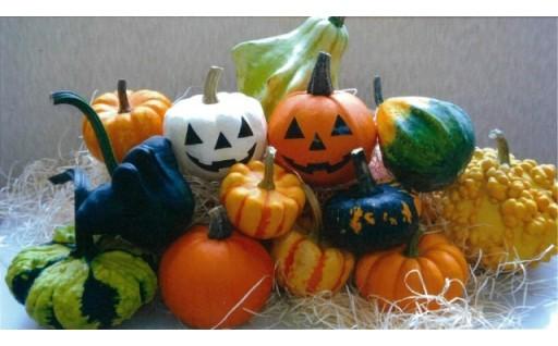 生産量日本一ハロウィン用おもちゃかぼちゃ(北海道秩父別町)