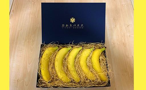 ひかりバナナの発送始まっています。