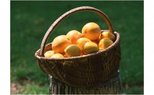 爽やかな秋に爽やかなレモン狩りで気持ちを爽やかに♪