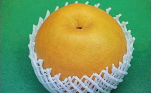 【数量限定】八街 小川梨園の甘く大きな梨の王様!新高梨