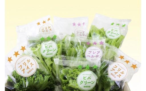 安心とおいしさを食卓へ【柿田川野菜】3種のレタスの詰合せ!