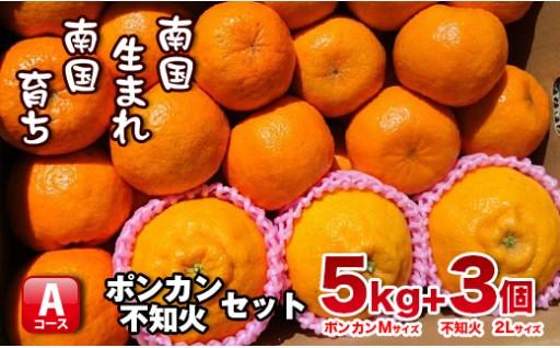 宮崎県串間産 不知火・ポンカンセット