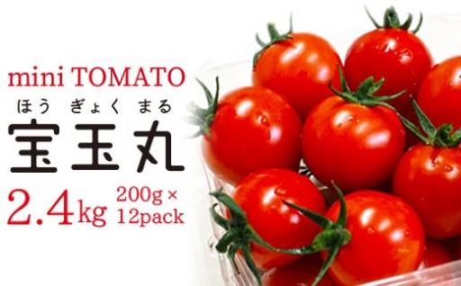 【朝どり直送】高糖度ミニトマト「宝玉丸」2.4kg