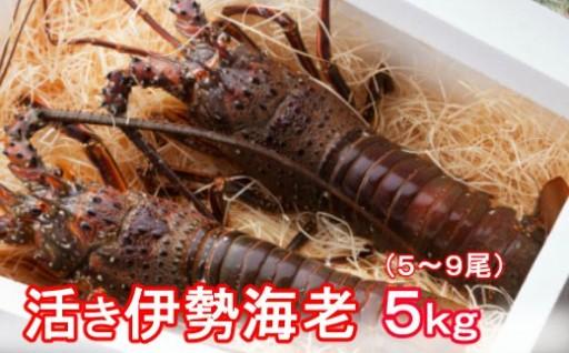 YJ042活伊勢海老【5kg】