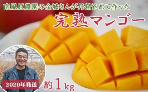 【2020年発送】南風原農園 丹精込めた完熟マンゴー1kg