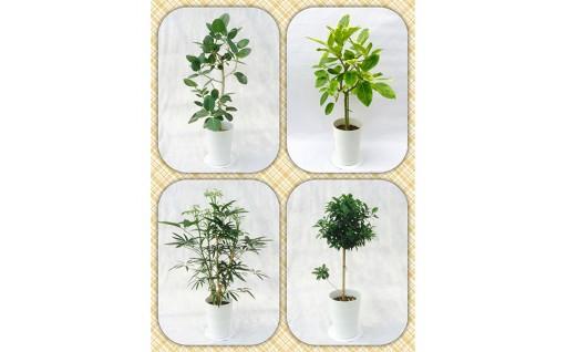 お部屋にプロが選ぶこだわりの観葉植物はいかがですか?