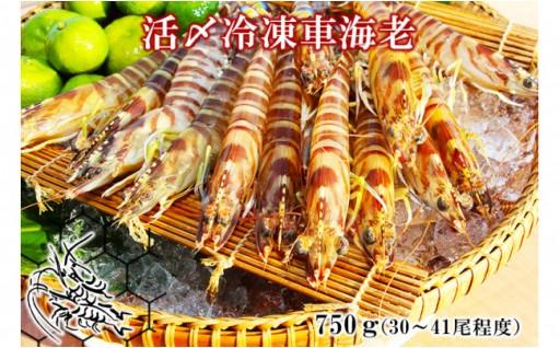 活〆冷凍車海老 生食用750g(30~41尾程度)