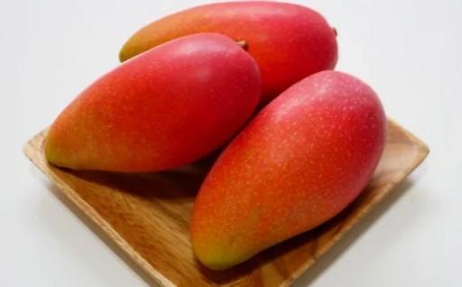 【2020年発送】赤金煌(レッドキンコウ)マンゴー約2kg