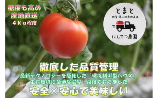 酸味と甘みのバランスが良く、コクのある糖度高めなトマトです