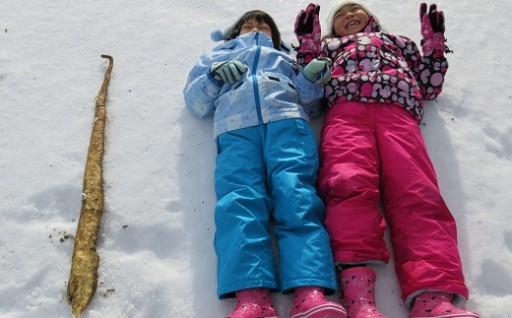 山形ゆりあふぁーむの雪中自然薯