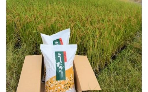 精米20kg令和元年新米「はなまる農園のコシヒカリ」