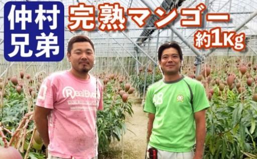 【2020年発送】仲村兄弟のマンゴー1Kg