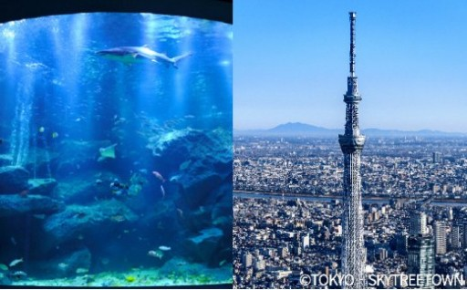 東京スカイツリーの天望デッキとすみだ水族館のペアセット