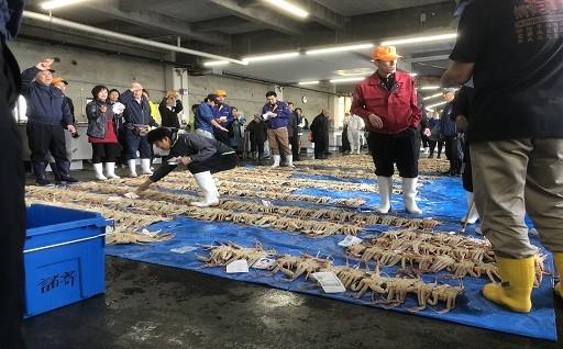 11月6日、いよいよ松葉がに漁解禁!