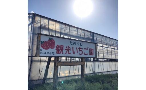 【先行予約】藤岡市のいちご「やよい姫」をぜひご賞味ください