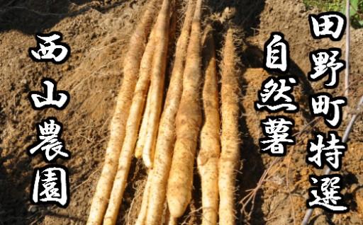 【四国一小さな町の自然薯】田野町特選「自然薯」1.5kg