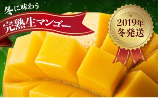 大変貴重です!冬に味わえる完熟生マンゴー!