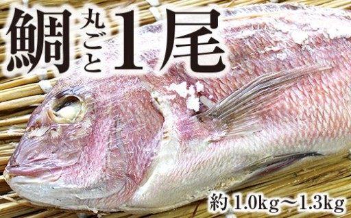 鯛の上総蒸し【大きな真鯛が丸ごと1尾!】