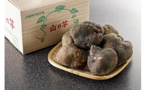 丹波山芋この山芋を食べると一生忘れられない事間違いなし!!!
