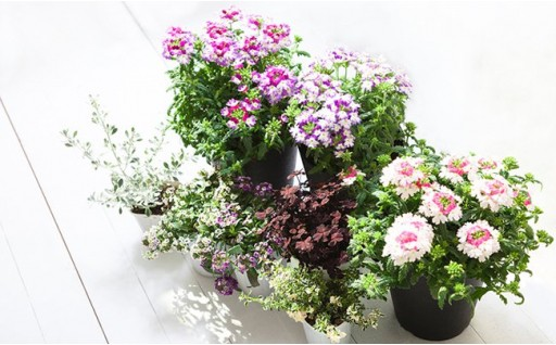 花のある生活で心豊かな季節のお花セット♪