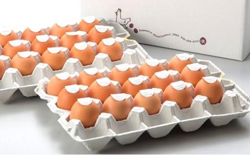 【定期便 奇数月 6回】卵かけごはん専用あさひ卵 L×30個