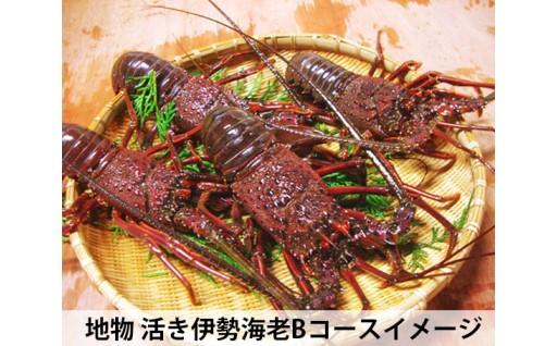 三重県南伊勢町産の活き伊勢海老!受付開始しました!!