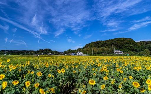 「日本一前向きなお花畑」のオーナーになりませんか?