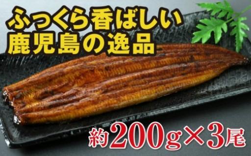 ☆地下水で育てた 鹿児島産うなぎ 特大200g×3尾 ☆