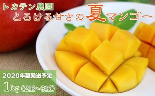 【2020年発送】トカテン農園とろける甘さの夏マンゴー1kg