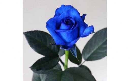 神秘的な青い染めバラをクリスマスプレゼントに!