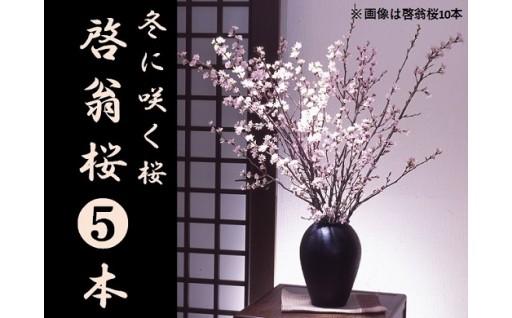 冬に咲く桜「啓翁桜」(5本束)