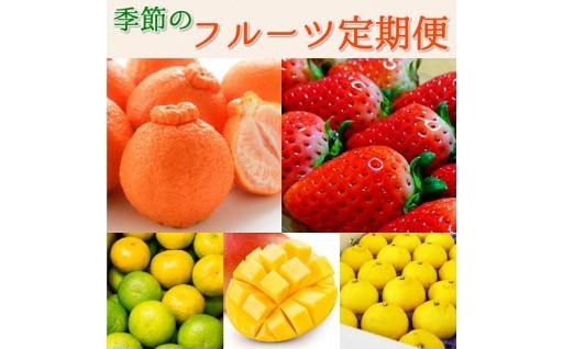 【締切間近です】季節のフルーツを満喫!芦北町から贈る定期便