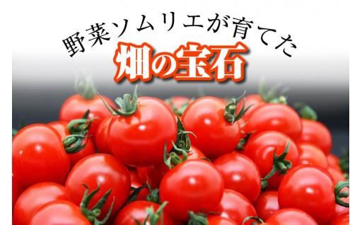 ソムリエミニトマト・プラチナ(3kg)