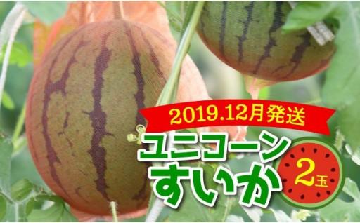 ※12月中旬より発送開始※南国・宮崎からスイカをお届け!