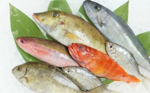 旬で新鮮な魚をお届けします!おまかせ鮮魚セット(約2kg)