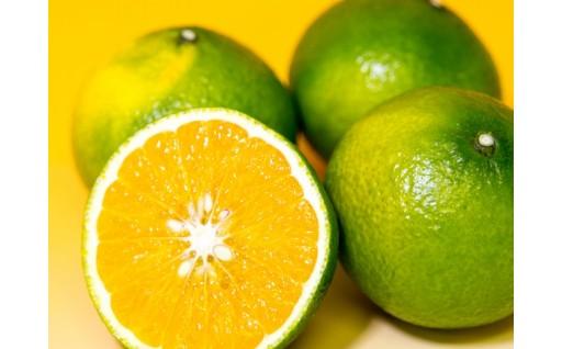 柑橘の町から贈る2種のミカンの詰め合わせ♪