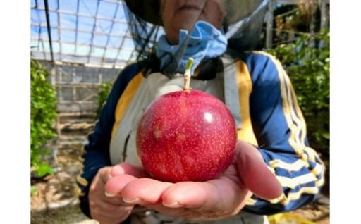 【2019年発送】神谷フルーツ園パッションフルーツ1.5kg
