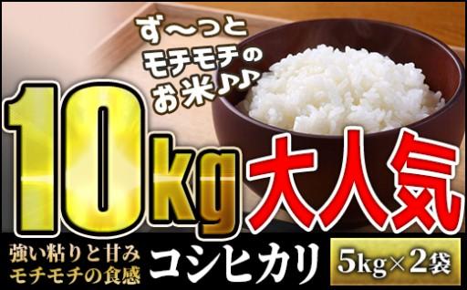モチモチ食感っ令和元年度産【コシヒカリ】10kg!!