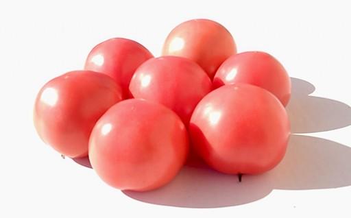 生産量日本一!! 熊本県 八代産 トマト 4㎏ 新鮮 とまと