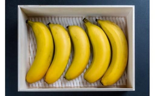 奄美バナナが登場です!