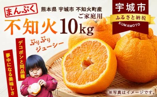 まんぷく不知火(家庭用) 約10kg みかん フルーツ