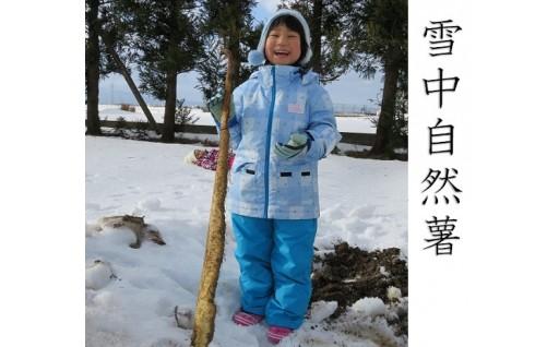 雪の中でゆっくり熟成された自然薯をぜひお召し上がりください★