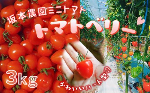 坂本農園のミニトマト・トマトベリー(3kg)