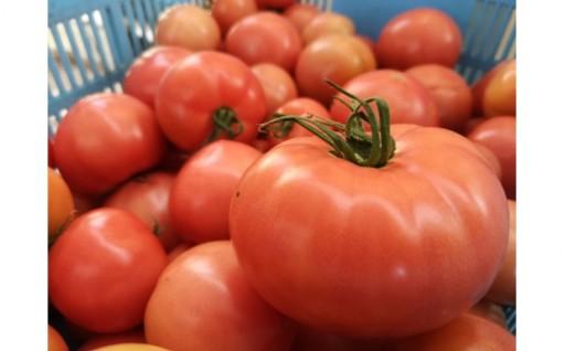 沼田さんちのトマト