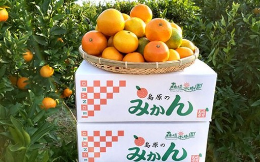 森崎果樹園のこだわり旬のみかんセット(10kg)